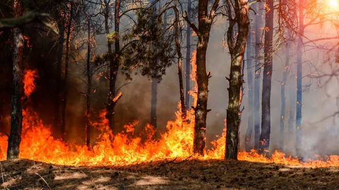 Plusieurs hectares de forêt en proie aux flammes en Algérie (photo d'illustration)