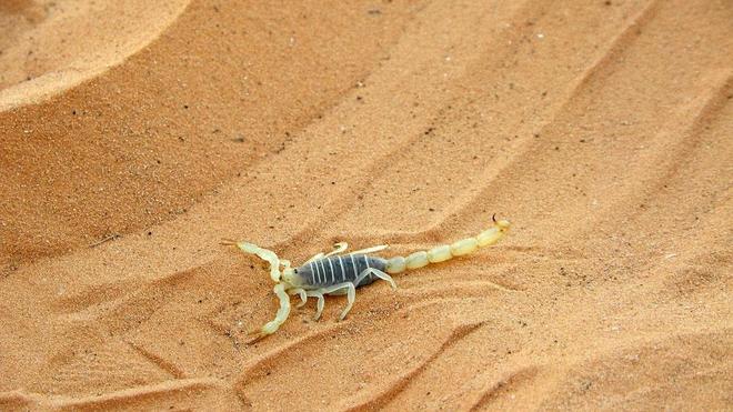 Et si le venin des scorpions et vipères avait aussi un bon côté (photo d'illustration)