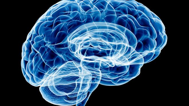 La méningite s'attache aux enveloppes qui protègent le cerveau et la moelle épinière (Illustration)