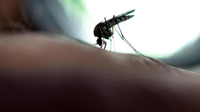 Djibouti : une épidémie sans précédent de chikungunya