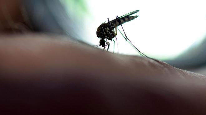En cette période de fortes pluies, les moustiques Aedes se multiplient plus facilement (Illustration)