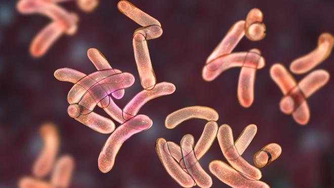 Les régions du Nord et de l'Extrême Nord du Cameroun sont les principaux foyers de propagation du vibrion cholérique, la bactérie responsable du choléra