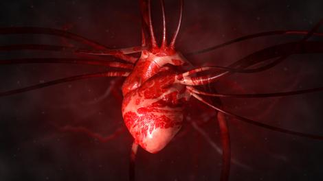 En Tunisie, les maladies cardiovasculaires tuent plus que tout