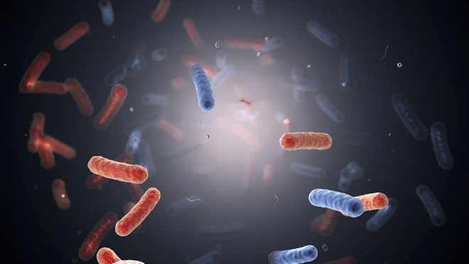 Certaines bactéries du genre salmonelle sont responsables de la fièvre typhoïde