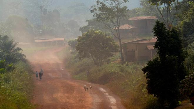 Une région forestière au Gabon (Illustration)