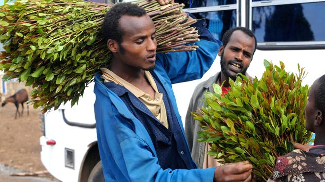 A Djibouti, la moitié des hommes consomment du khat
