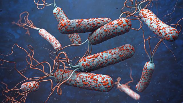 Le choléra