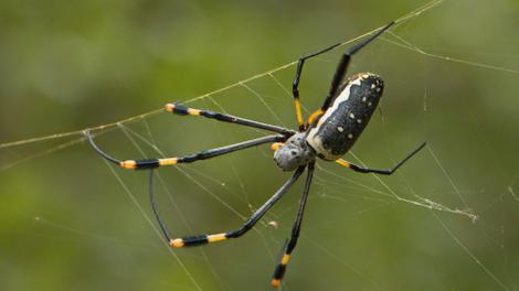 Les 5 espèces d'araignées les plus dangereuses d'Afrique