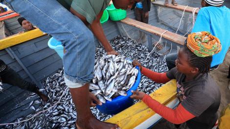 Farine et huile de poisson : l'exportation affame l'Afrique de l'Ouest