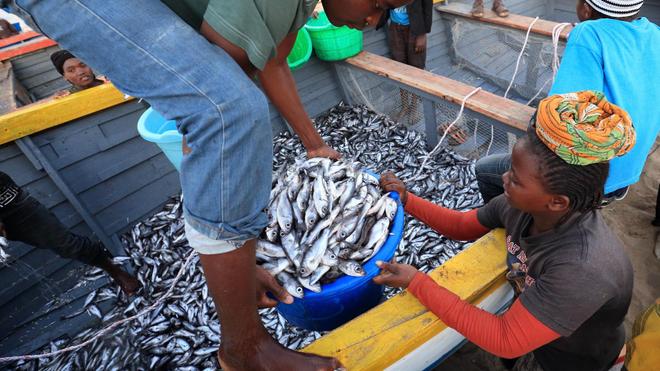 La transformation et l'exportation du poisson affame l'Afrique de l'Ouest (Image d'illustration/Crédit photo Dietmar Temps)