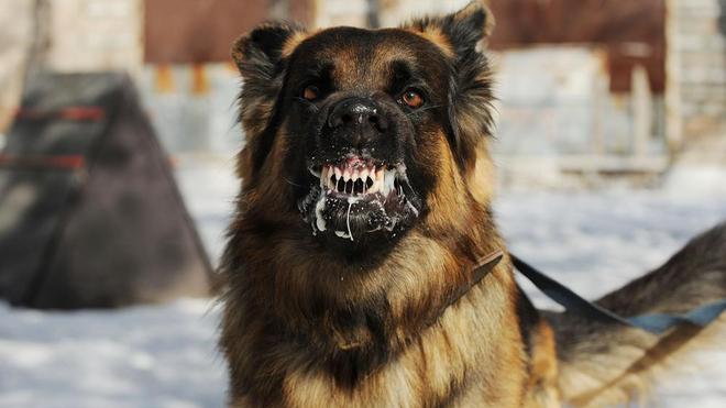 Le chien est l'un des principaux vecteurs de la rage (photo d'illustration)