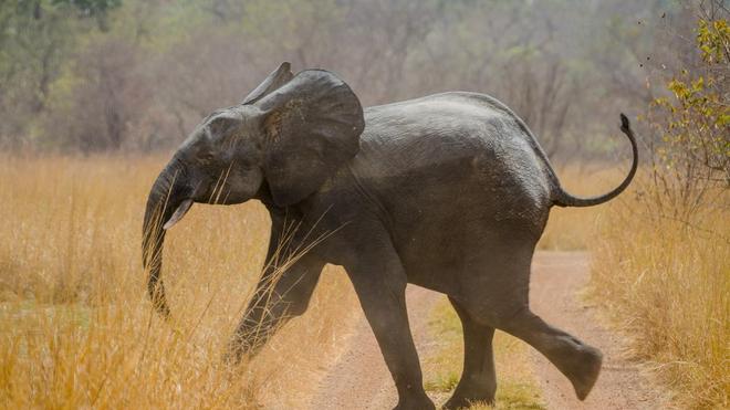 La population de pachydermes a été divisée par deux en 30 ans (Image d'illustration)