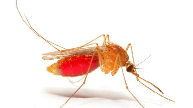 Le paludisme d'importation fait des ravages en Algérie