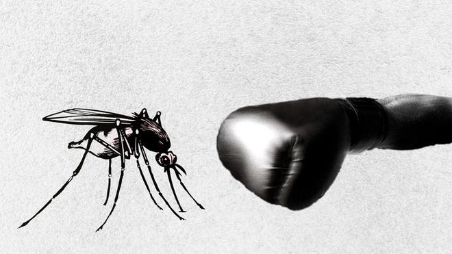 L'Algérie fait face au paludisme d'importation (photo d'illustration)
