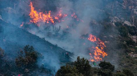 Après l'Algérie, le Maroc est touché par des feux de forêt