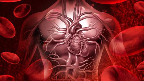 Alimentation, activité physique, sommeil... comment bien prendre soin de son coeur