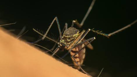 A Mayotte, la chasse aux moustiques est ouverte !