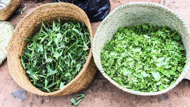 Coronavirus : vers une médecine traditionnelle plus performante en Afrique de l'Ouest ?