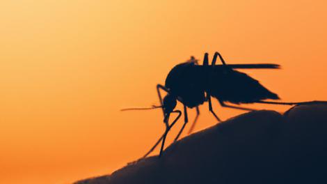 """Paludisme ? Le Tchad affronte une """"maladie fébrile"""""""