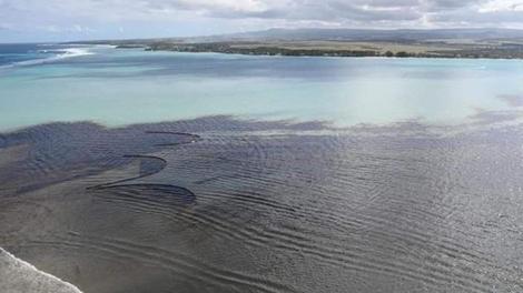 Pollution : poissons, biodiversité, santé... toutes les conséquences de la marée noire à Maurice