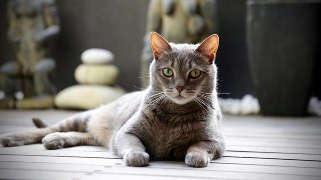 Adoption d'un chat : comment faciliter son arrivée chez vous