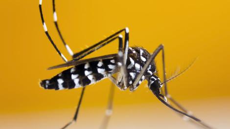 Dengue : le moustique tigre fait des ravages à La Réunion
