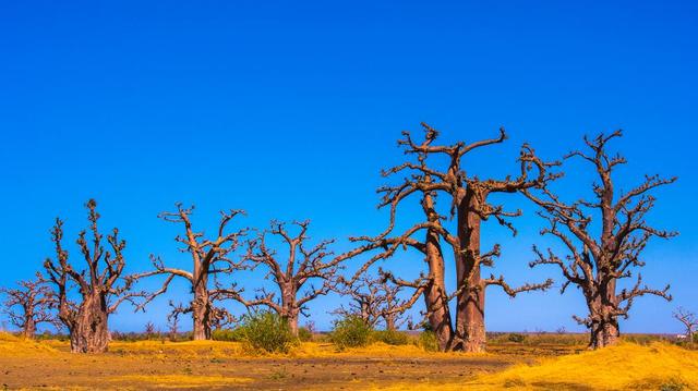 Reforestation : le Sénégal veut planter 20 millions d'arbres