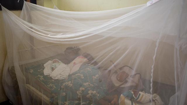 Maladie du sommeil : sur la voie de l'éradication