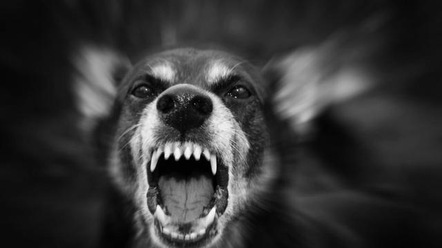 Rage : que faut-il faire après une morsure de chien ?
