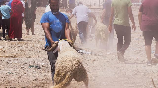 Aïd Al Adha et Coronavirus : le Maroc ferme des souks aux moutons pour non-respect des mesures sanitaires