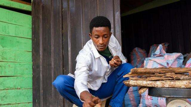 Covid-Organics, artemisia...  l'OMS et les CDC Afrique encouragent la médecine traditionnelle