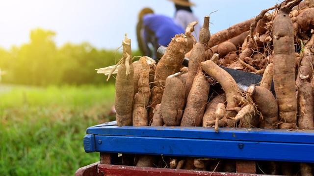 Manioc, Igname, carotte, niébé... ces aliments bons pour le coeur et les vaisseaux sanguins
